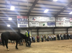 horse being judged in ring